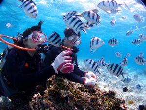 沖縄 ダイビング写真