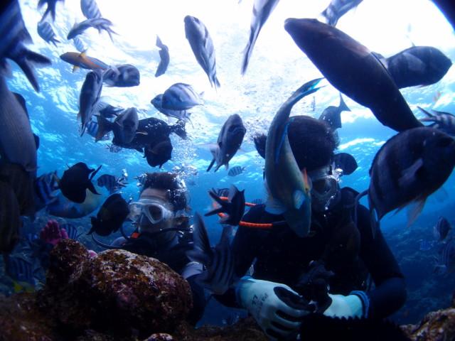 秋晴れの沖縄でダイビング&シュノーケル! 2019年10月29日のお客様