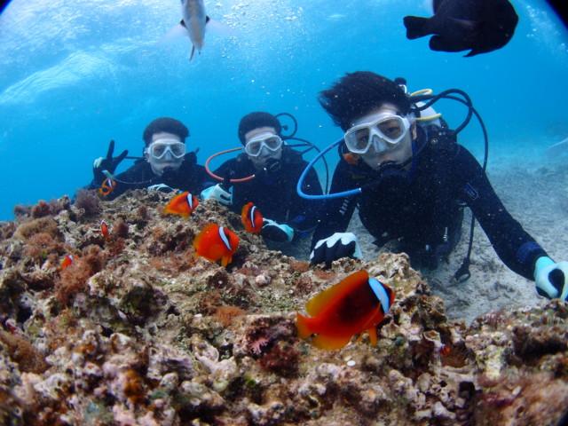 沖縄 クマノミいっぱいのダイビング2020年2月16日のお客様