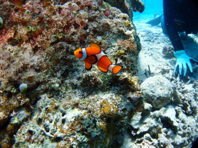 沖縄の秘境!?体験ダイビング&シュノーケルツアー 2020年3月16日のお客様